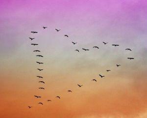 peace-eagle-heart
